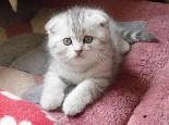 貓咪眺望窗外有可能患抑郁癥