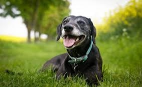 狗狗为什么会吃草