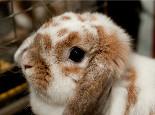 教你怎样让兔兔尽快适应环境
