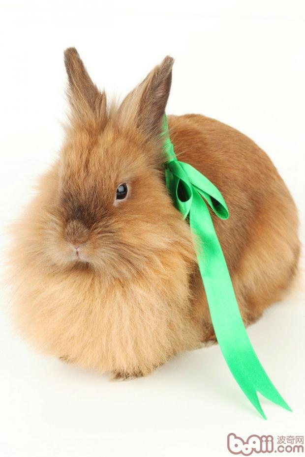 你知道,兔子舔人代表什么吗?当它舔人的时候应该怎么办呢?