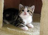 """如何训练猫咪听懂""""过来""""指令"""