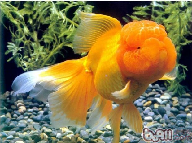 寄生虫对鱼类的十大危害