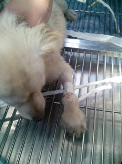 有关犬猫狗留置针的若干问题