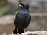 为什么鸟儿不宜与人共处一室