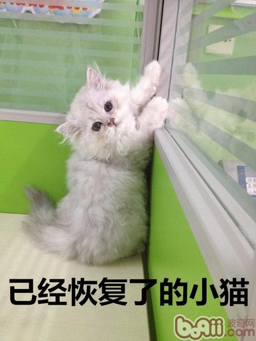 猫鼻支的护理和治疗