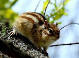 鼠鼠经常性软便是什么原因