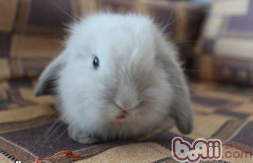 科学小班可爱的兔子ppt