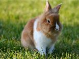 养兔兔挑选宠物医生很重要