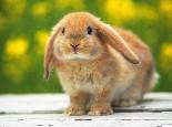 养兔注意:警惕兔兔咬电线