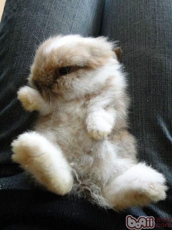 兔兔可以训练认识主人吗-轻博客