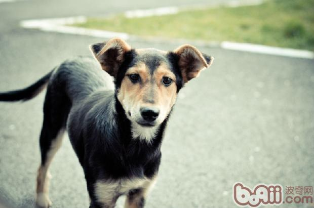只有正确对待狗狗,才能消除他们流浪时的不安情绪