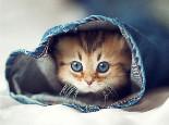 魅力猫眼的秘密大揭秘