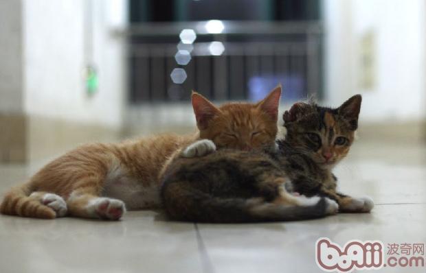 猫咪与人图片大全可爱