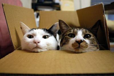 壁纸 动物 猫 猫咪 小猫 桌面 400_266