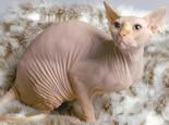 猫咪乳腺肿瘤该怎么防治
