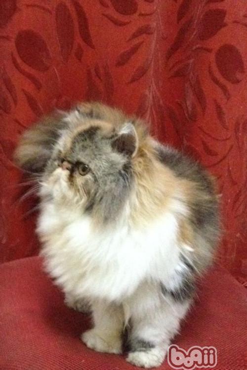如何使用猫薄荷