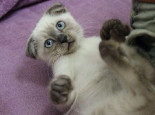 怎样保证猫咪的安全