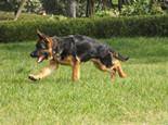 狗狗做绝育手术后会有哪些改变