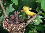 幼鸟各时期断奶的方法