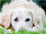 狗狗眼屎增多的原因及辨别