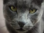 怎样鉴别初生小猫的性别