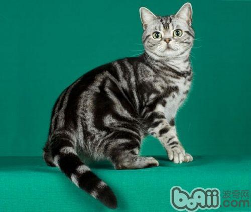 壁纸 动物 猫 猫咪 小猫 桌面 500_423