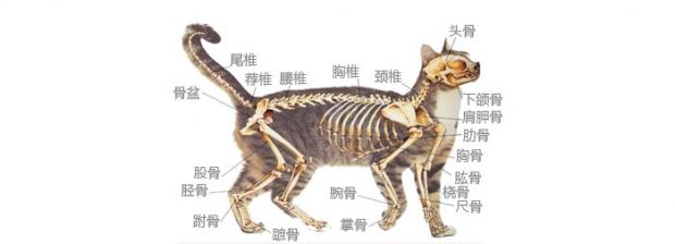 拉猫尾巴会导致拉稀有没有科学依据