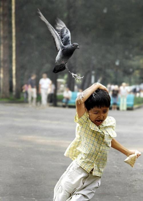 一张图告诉你鸟能否边飞边排泄