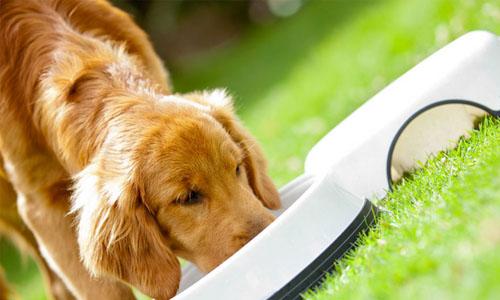 你想不到的狗狗不能吃的食物