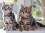 如何为猫咪选择一个良好的玩伴