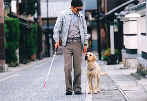 正确认识人类的好朋友——导盲犬
