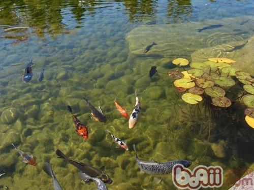 如何通过肉眼观察水质|观赏鱼养护