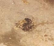 宠物龟胃肠炎的诊治