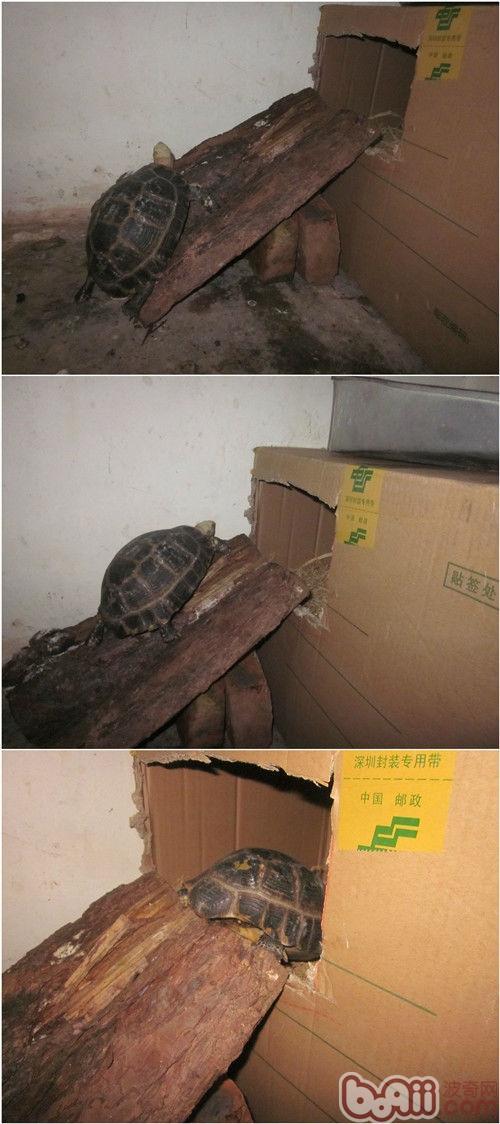 缅甸陆米奇网站冬眠的个人经验
