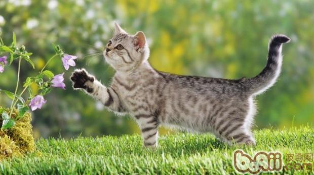 改善猫咪毛质的有效方法——户外运动