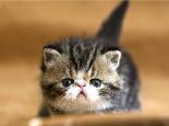 猫咪呕吐是生病了吗