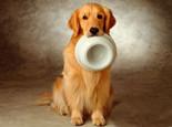 狗粮成分含量大揭秘