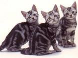 猫咪患病会出现哪些特征