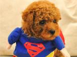 冬天狗狗应该穿衣服吗?