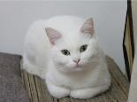 人类感冒药能用来医治猫咪吗