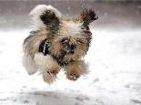 冬季狗狗健康饮食管理五大原则