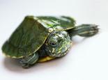 巴西龟日常所需的七要素