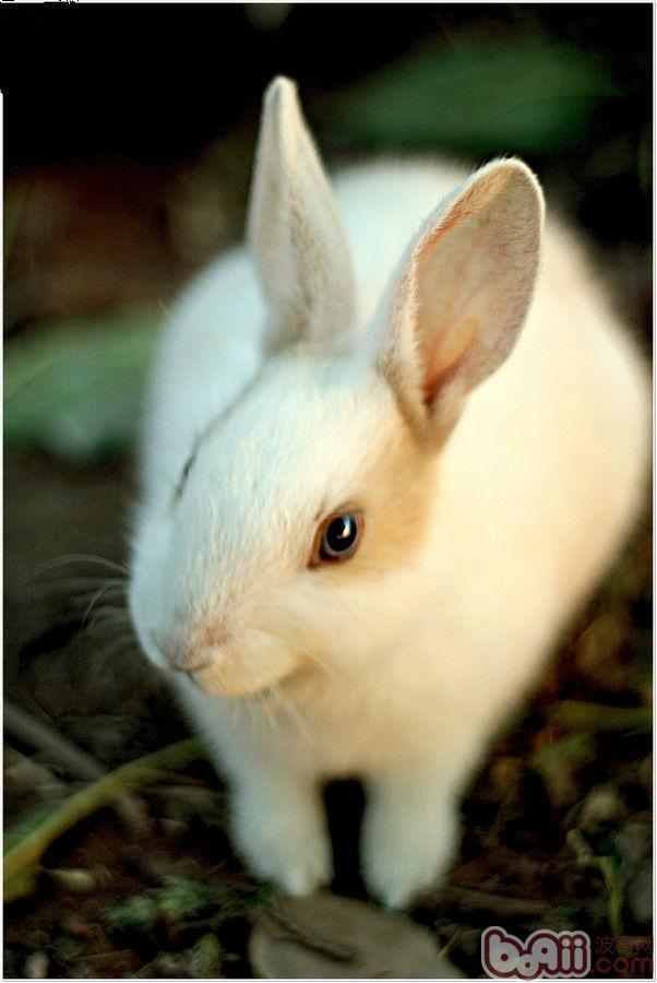 壁纸 动物 兔子 602_900 竖版 竖屏 手机