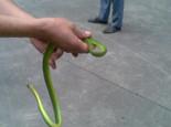 宠物蛇有什么特点