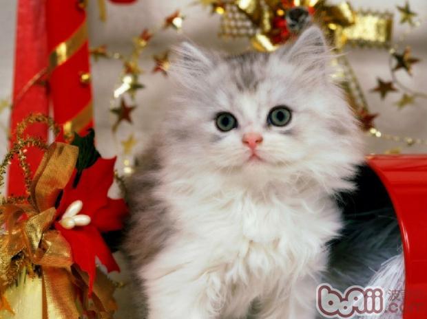 给猫咪祛粉刺的方法
