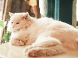 猫咪做错事要怎样教育