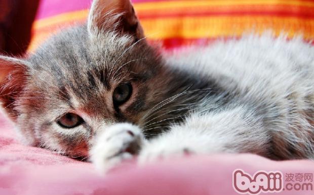 胆小猫咪怎样训练与人亲近