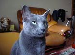 为宠物猫选窝需注意哪些