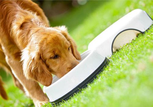 培养狗狗好的吃饭礼仪