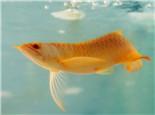 影响观赏鱼生长的八种水质